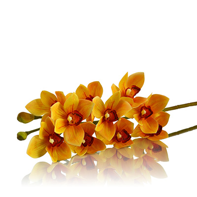 Cymbidium Orchids Yellow