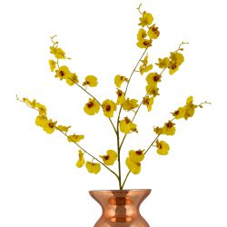 dancing lady orchids yellow